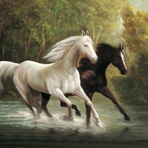 SO-70545 - Cavalli al galoppo in uno stagno - M. Ruiz