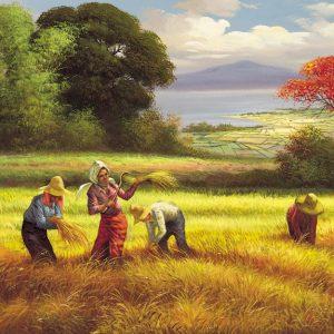SO-70709 - Il raccolto - Ocampo