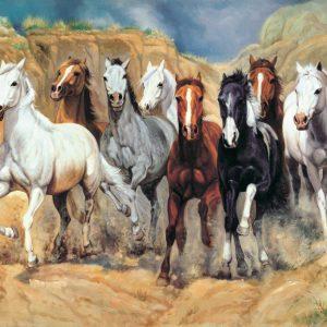 SO-71220 - Torma di cavalli in libertà - S. Santos
