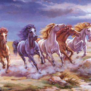 SO-73108 - Cavalli in libertà - Rini