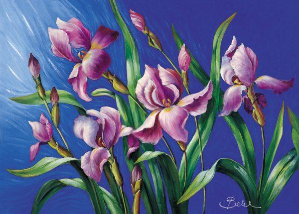 SO-73138 - Iris - Bellini