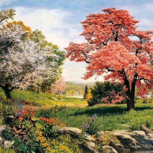 SO-73342 - Parco con alberi in fiore - P. Rowlands