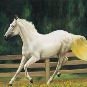 SO-73762 Cavallo bianco - Rajco