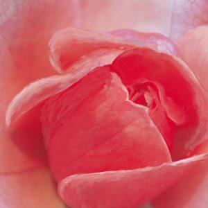 SO-73825 - Rosa rossa - Crystal